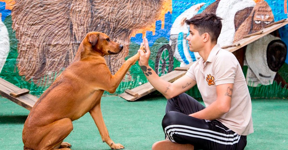 Cleber Santos, proprietário da ComporPet, adestra cachorro
