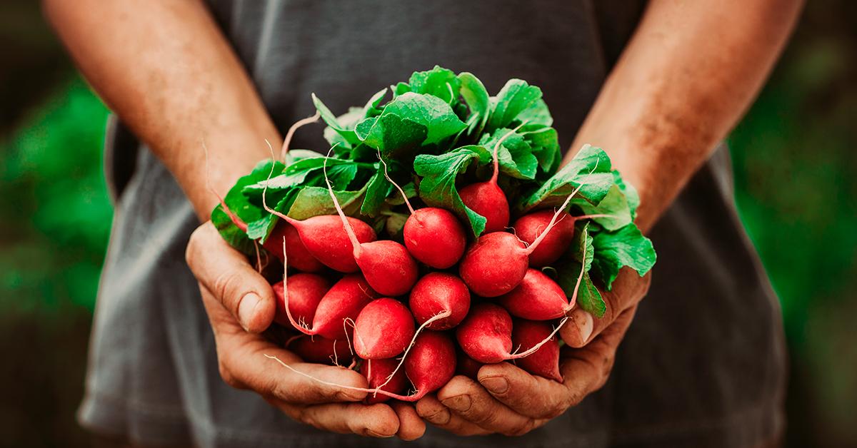 Brasileiros optam cada vez mais pelos alimentos orgânicos